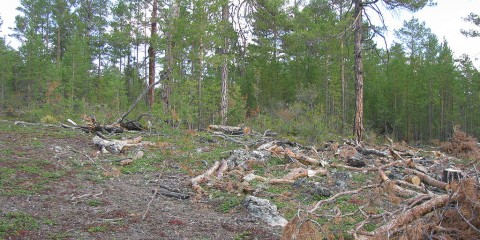 Foto: http://commons.wikimedia.org/wiki/File:Deforestation_Olkhon.JPG