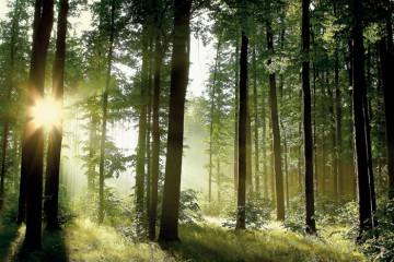 Foto: www.ecologic.rec.ro