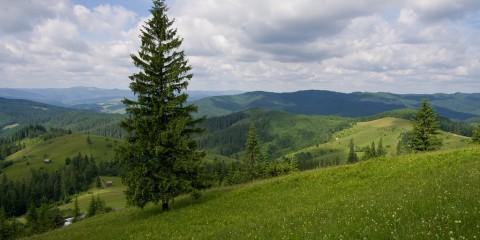 Obcini (Foto: Iliuță Iliuțescu)