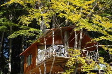 Foto: Casa din copac 1/Complex Harmonie
