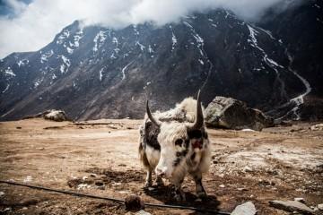 Foto: http://www.boredpanda.com/hiking-travel-photography-berta-tilmantaite-himalayas/
