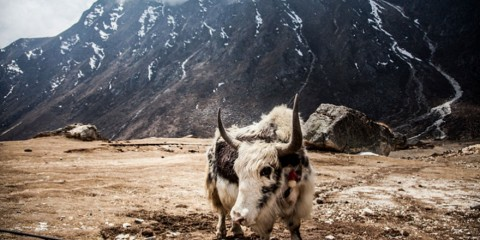 Foto: http://www.boredpanda.com/hiking-travel-photography-berta-tilmantaite-himalayas/