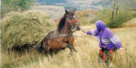 Foto: http://www.voceatransilvaniei.ro/un-fotograf-ardelean-duce-apusenii-la-paris-intr-o-expozitie-foto-inedita-galerie-foto/
