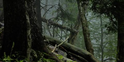 Foto: http://schickhofer-photography.com/