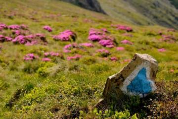 Foto: Asociația Montană Carpați
