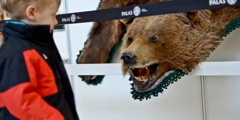 Foto: http://www.ziaruldeiasi.ro/stiri/galerii-foto-peste-100-animale-vanate-in-europa-asia-si-africa-expuse-la-iasi--88308.html